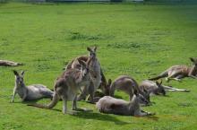 Quantomanca - Familyblogger - da Melbourne a Sydney quinta parte